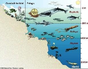 Hoover MS - Media Center - Ocean Zones